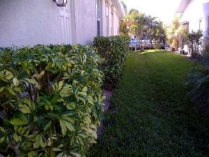 hedging3