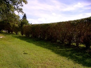 hedging4